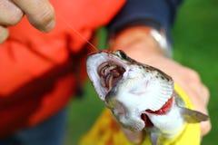 Amorce de poissons attrapée par poissons Photo libre de droits
