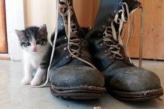 amorce le chaton Photo stock