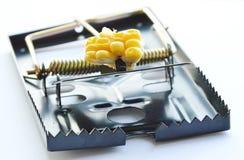 Amorce noire de piège de rat de fer par la graine de maïs sur le fond blanc Photos libres de droits