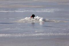 Amorce pour la pêche d'hiver Photos libres de droits