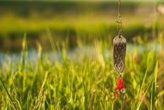 Amorce pour les poissons contagieux sur un fond d'herbe verte Photos stock