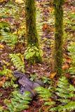 Amorcez qui a été découvert dans la forêt Images stock
