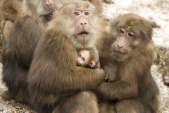 Amore animale Immagini Stock Libere da Diritti