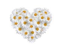 Amore, cuore delle margherite Fotografia Stock