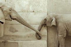 Amore degli elefanti Immagine Stock