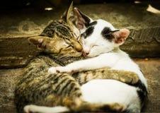 Amore dei gatti Fotografie Stock