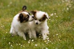 Amore del cucciolo Immagine Stock