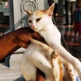 Amore del gatto immagini stock libere da diritti