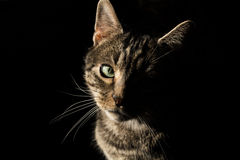 Amore del gatto Fotografia Stock
