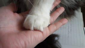 Amore del gatto Immagini Stock