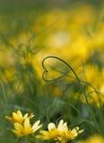 Amore del giardino Fotografia Stock
