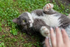 Amore del ` s del gatto Amicizia fotografie stock