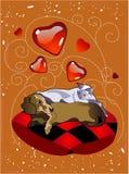 Amore dell'animale domestico Fotografia Stock