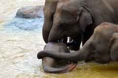 Amore della famiglia dell'elefante Fotografia Stock