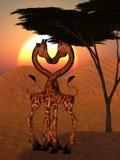 Amore della giraffa Fotografia Stock