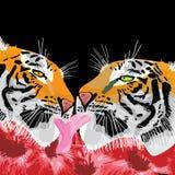 Amore della lingua della tigre Fotografia Stock