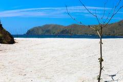 Amore della spiaggia Fotografia Stock