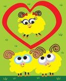 Amore delle pecore Fotografia Stock