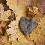 Amore di autunno Fotografia Stock