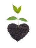 Amore di Eco fotografia stock libera da diritti