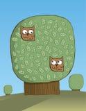 Amore di Owlsl Immagine Stock
