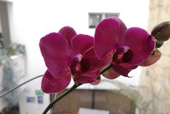 Amore di pace dell'ufficio del fiore di OrquÃdea fotografie stock libere da diritti