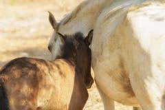 Amore di un cavallo del bambino e della madre Un bello momento immagini stock libere da diritti