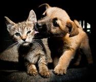 Amore e bacio del gattino del cucciolo Immagini Stock Libere da Diritti