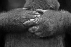 Amore e protezione Fotografie Stock Libere da Diritti