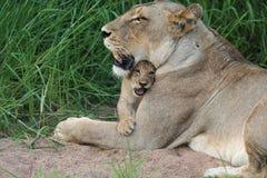 Amore Motherly Fotografie Stock Libere da Diritti