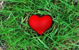 Amore naturale Fotografie Stock Libere da Diritti