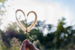 Amore nel legno immagine stock
