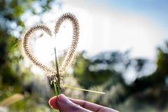 Amore nella foresta Fotografia Stock