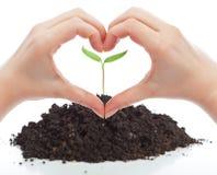 Amore per il concetto della natura Immagine Stock Libera da Diritti