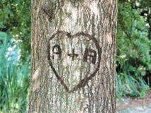 Amore su un albero Fotografie Stock Libere da Diritti