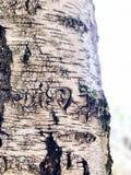 Amore tatuato fotografie stock libere da diritti