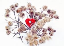 Amore tramite le spine Fotografia Stock
