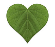 Amore verde Immagini Stock