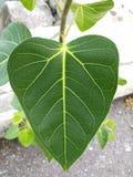 Amore verde Fotografie Stock Libere da Diritti