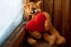 Amores do Tomcat fotografia de stock royalty free
