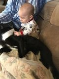Amores novos do menino no gato novo imagem de stock