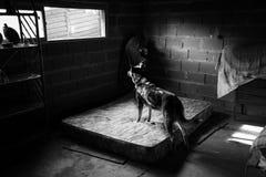 Amores Perros Fotos de Stock Royalty Free