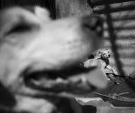 Amores Perros Image libre de droits