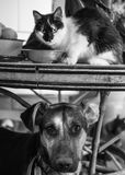 Amores Perros Photographie stock