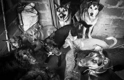 Amores Perros Foto de Stock Royalty Free