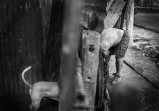 Amores Perros Fotografia Stock Libera da Diritti