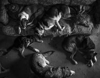 Amores Perros. Julio 42 year-old from Berazategui, he rescued and recovering stray dogs found abandoned, sick or in poor condition, is in charge of hygiene, food Royalty Free Stock Images