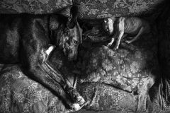 Amores Perros. Julio 42 year-old from Berazategui, he rescued and recovering stray dogs found abandoned, sick or in poor condition, is in charge of hygiene, food Royalty Free Stock Photos
