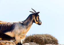 In Amorgos-eiland in Griekenland Royalty-vrije Stock Foto