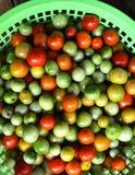 Amoroso tomato, Solanum lycopersicum Amoroso Stock Photography